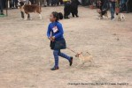 Chandigarh Dog Show 2013 | child handling,sw-75,