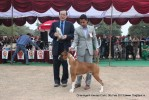 Chandigarh Dog Show 2013 | sw-75,