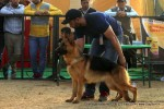 Chandigarh Kennel Club | ex-245,gsd,sw-110,