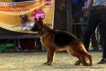 Chandigarh Kennel Club | ex-246,gsd,sw-110,
