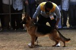 Chandigarh Kennel Club | ex-247,gsd,sw-110,
