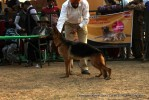 Chandigarh Kennel Club | gsd,sw-110,