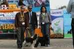 Day 2 IKL Show IIPTF | all breed championship,spaniel,