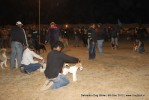 Dehradun Dog Show 2012 | line up,sw-73,