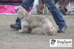 Dehradun Dog Show | cocker,