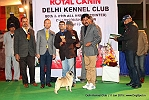 Delhi Kennel Club  | 8th best in show,ex-32,line up,sw-145,