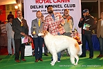 Delhi Kennel Club  | 7th best in show,ex-97,line up,sw-145,