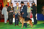 Delhi Kennel Club  | 6th best in show,ex-334,line up,sw-145,