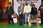 Delhi Kennel Club  | 5th best in show,ex-37,line up,sw-145,