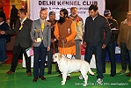 Delhi Kennel Club  | 3rd best in show,ex-153,line up,sw-145,