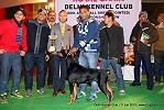 Delhi Kennel Club  | 2nd best in show,ex-197,line up,sw-145,