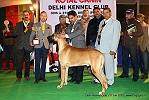 Delhi Kennel Club  | 1st best in show,ex-222,line up,sw-145,