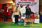 Delhi Kennel Club  | 7th best in show,ex-37,line up,sw-145,