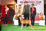 Delhi Kennel Club  | 5th best in show,ex-178,line up,sw-145,