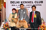 Delhi Kennel Club  | 4th best in show,ex-68,line up,sw-145,