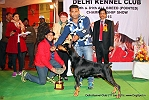 Delhi Kennel Club  | 1st best in show,ex-197,line up,sw-145,