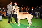 Delhi Kennel Club  | 3rd best in show,ex-207,line up,sw-145,