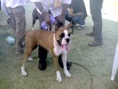 Dog Show 2009 by Ahmedabad Canine Club @ St Xavier's Loyola Memnager on 8th Nov 09 |