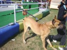 Dog Show on Date 31-01-2010 by Kennel Club of India | Dog Show on Date 31-01-2010 by Kennel Club of India