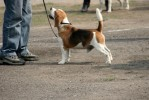 dog watch | Picasa 3.0,