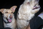 my dogs :) |