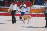 dogshow in my city | dogshow in my city