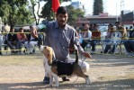 Doon Valley Kennel Club, 5 Dec 2010 | beagle,ex-45,sw-13,
