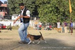 Doon Valley Kennel Club, 5 Dec 2010 | beagle,ex-52,sw-13,