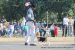 Doon Valley Kennel Club, 5 Dec 2010 | beagle,ex-59,sw-13,