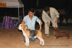 Doon Valley Kennel Club, 5 Dec 2010 | beagle,ex-60,sw-13,