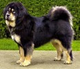 my fav dog breeds | my fav dog breeds