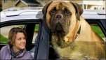 Giant Dogs | giant dogs