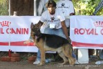 Gujarat Kennel Club | ex-179,gsd,sw-44,