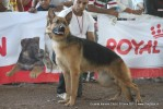 Gujarat Kennel Club | ex-194,gsd,sw-44,