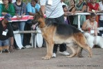 Gujarat Kennel Club | ex-196,gsd,sw-44,