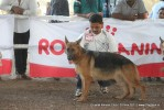 Gujarat Kennel Club | ex-199,gsd,sw-44,