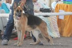 Gujarat Kennel Club | ex-202,gsd,sw-44,
