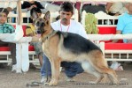 Gujarat Kennel Club | ex-203,gsd,sw-44,