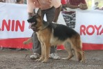 Gujarat Kennel Club | ex-204,gsd,sw-44,