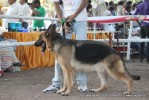 Gujarat Kennel Club | ex-206,gsd,sw-44,