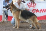 Gujarat Kennel Club | ex-208,gsd,sw-44,