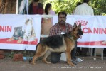 Gujarat Kennel Club | ex-211,gsd,sw-44,
