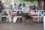 Gujarat Kennel Club | ex-220,gsd,sw-44,