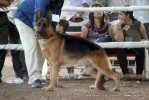 Gujarat Kennel Club | ex-228,gsd,sw-44,