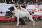 Gujarat Kennel Club | ex-56,pointer,sw-44,