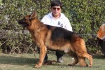 Gurgaon Dog Show (2 Feb 2014) | gsd,,sw-113