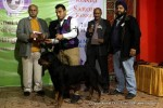 Gurgaon Dog Show (2 Feb 2014) | lineup,,sw-113