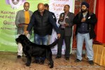 Gurgaon Dog Show (2 Feb 2014) | lineup,,sw-113,ex-92