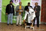 Gurgaon Dog Show (2 Feb 2014) | lineup,,sw-113,ex-42