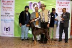 Gurgaon Dog Show (2 Feb 2014) | lineup,,sw-113,ex-112
